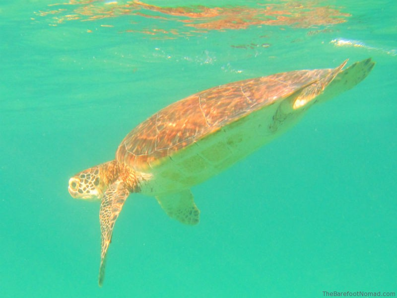 turtle spotting at akumal bay - Click through to see about the other sites you won't want to miss! | www.bylaurenm.com