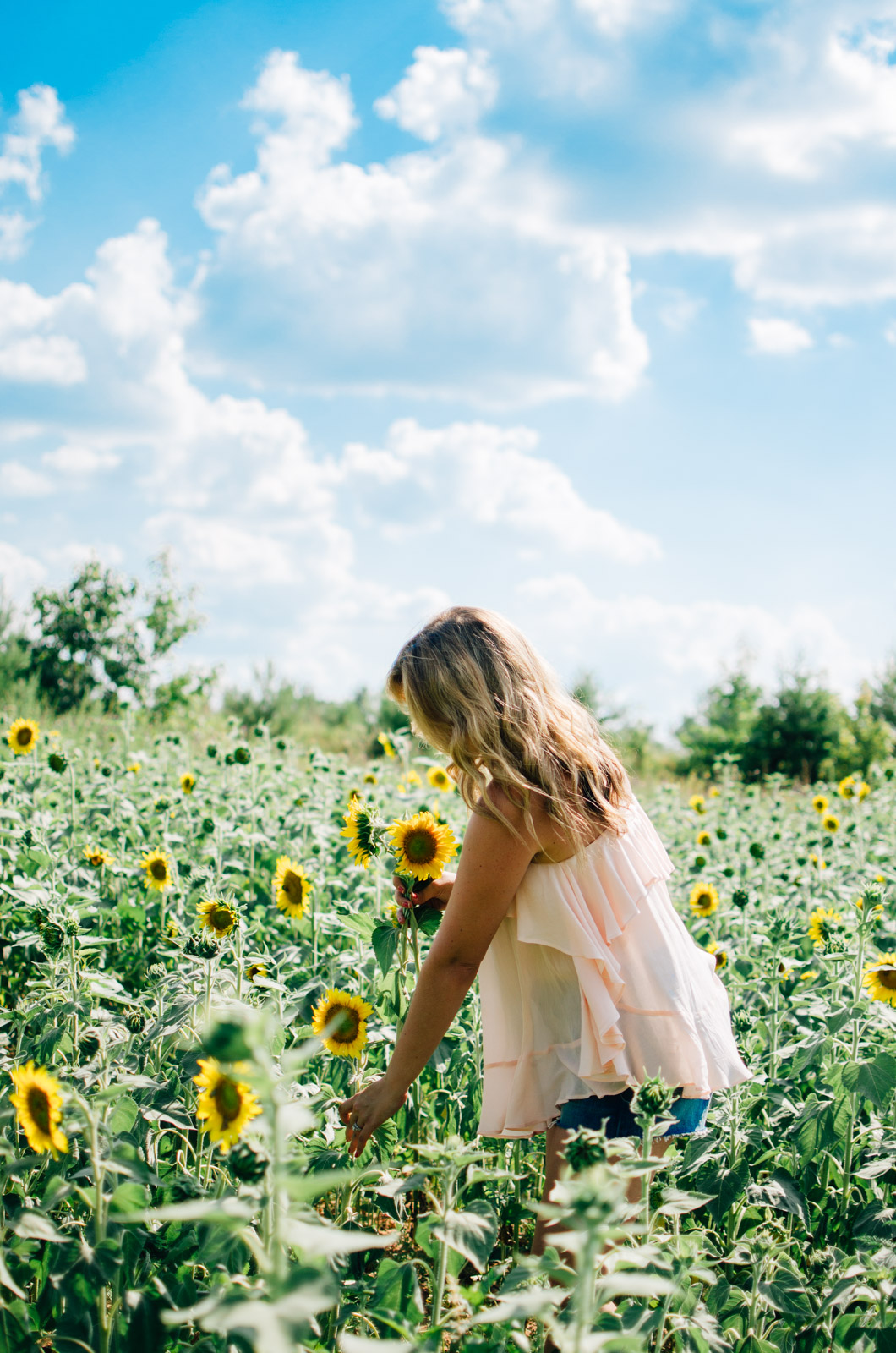sunflower picking richmond virginia - richmond virginia fashion blogger | For more cute summer outfits, head to bylaurenm.com