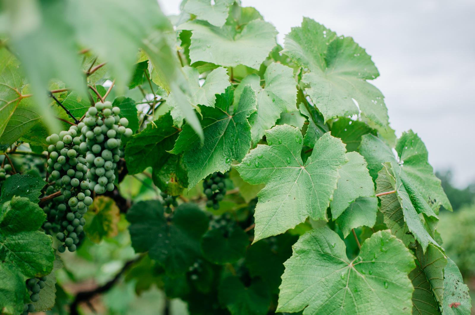 richmond winery - richmond virginia blogger   bylaurenm.com